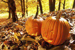 Carved Jack O Lanterns