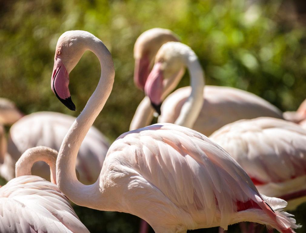 Dal 5 al 7 maggio... birdwatching ai Lidi Ferraresi!